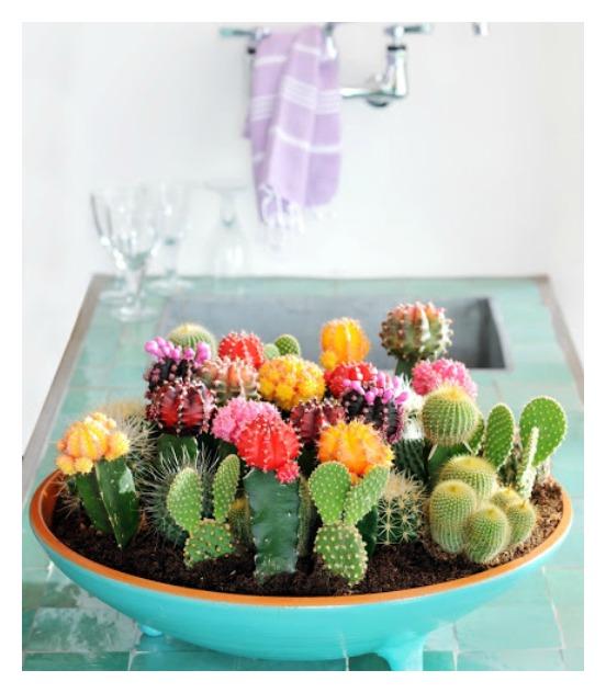 Plants_13