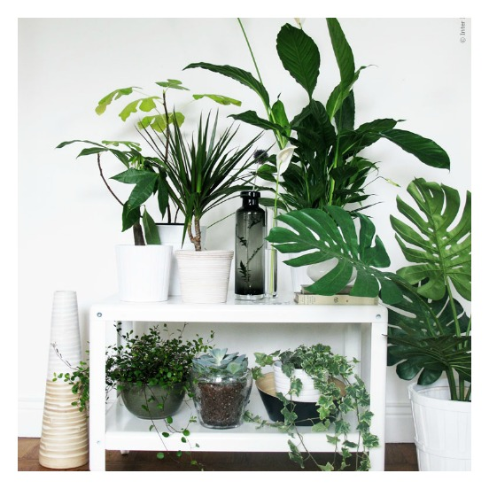 Plants_6