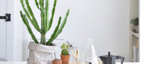 Trend Alert: Cacti are a Thing