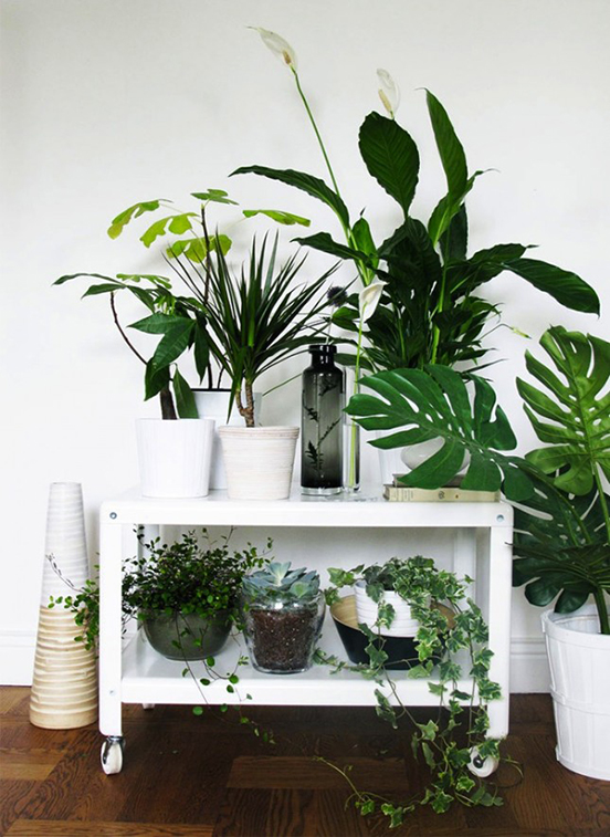 plants-home-decor-1-645x885