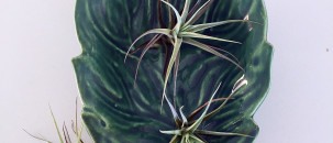 Fun with Stodels Airplants Giveaway