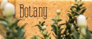 Madam Botany
