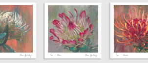 The Prettiest Protea Paintings & Prints